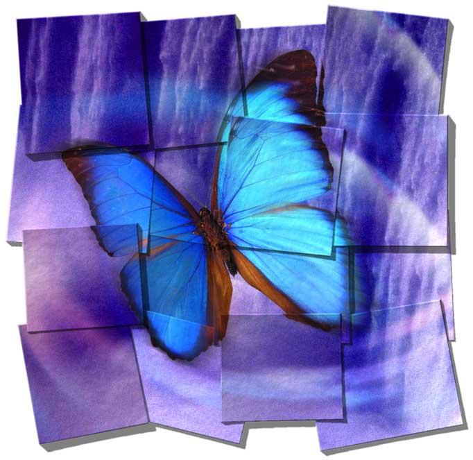 volare farfalla blu