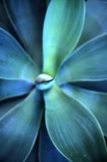 foglia blu