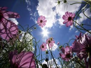 Fiori verso il Sole